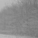 雪の降る夢は困難の予知夢!?